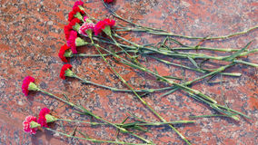 Красные гвоздики на камне гранита Стоковые Фотографии RF