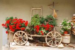 Красные гераниумы на античной деревянной тележке Стоковые Фотографии RF