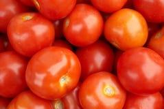красные глянцеватые томаты Стоковое Изображение RF