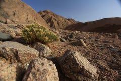 Красные горы и утесы в Египте Стоковое Изображение