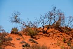 Красные грязь и тени Стоковое Фото