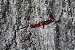 красные глисты Стоковые Фото