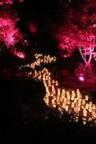 Красные деревья вдоль реки свечи Стоковые Фотографии RF
