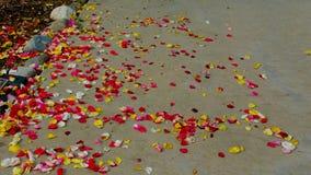 Красные, желтые, розовые цветения &White стоковые изображения