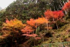 Красные, желтые и зеленые лист Стоковое Изображение