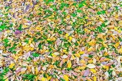 Красные желтые кленовые листы осени на траве свежей весны зеленой Стоковое Фото