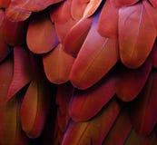 Красные, желтые, оранжевые пер Стоковые Фотографии RF