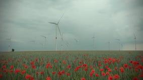 Красные заводы мака и голубые цветки в ниве на пасмурной погоде Турбина и деревья энергии ветра на заднем плане на сток-видео