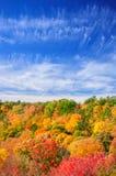 Красные, зеленые и желтые деревья клена в падении Стоковая Фотография RF