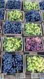 Красные, зеленые & черные виноградины таблицы Стоковое Изображение