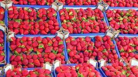 Красные зрелые клубники весной стоковые фотографии rf