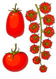 красные зрелые томаты комплекта Стоковые Изображения RF