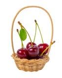 Красные зрелые вишни с лист в корзине изолированной на белом backgrou Стоковое Фото