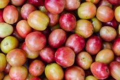Красные зрелые кофейные зерна. стоковые изображения