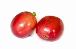 Красные зрелые кофейные зерна. стоковые фото