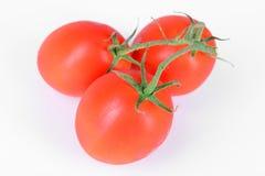 Красные зрелые томаты Стоковые Фотографии RF