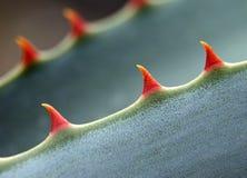 красные зубы Стоковая Фотография RF