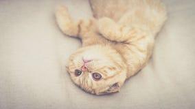 Красные игры котенка Стоковые Изображения RF