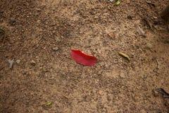 Красные листья Стоковое Изображение