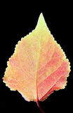 Красные листья Стоковое фото RF
