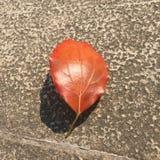 Красные листья стоковые фото