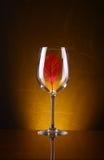 Красные лист в стекле Стоковое Изображение