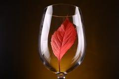 Красные лист в стекле Стоковые Изображения