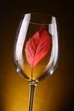 Красные лист в стекле Стоковые Фото