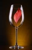Красные лист в стекле Стоковое Изображение RF