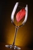 Красные лист в стекле Стоковое Фото