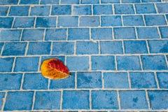 Красные лист на голубом поле Стоковые Изображения RF