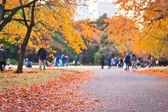 Красные лист на парке осени Стоковые Изображения