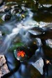 Красные лист отдыхая на камне в потоке Стоковые Изображения RF