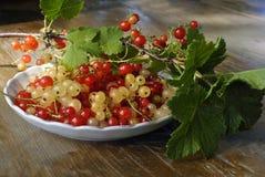 Красные и белые ягоды на плите Стоковое Изображение RF