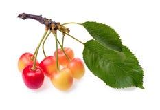 Красные и желтые вишни с листьями на белой предпосылке Стоковое Изображение RF