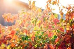 Красные и желтые листья осени стоковая фотография rf
