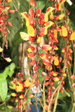 Красные и желтые орхидеи Стоковые Фотографии RF