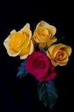 Красные и желтые розы Стоковое Изображение RF