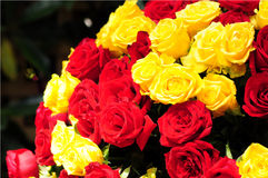 Красные и желтые розы стоковая фотография