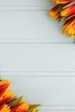 Красные и желтые тюльпаны лежа в ряд на пастельной предпосылке с местом для текста против детенышей весны цветка принципиальной с Стоковое Фото