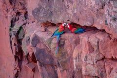 Красные и зеленые ары, Ara Chloropterus, Buraco Das Araras, около пеламиды, Pantanal, Бразилия стоковые изображения rf
