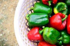 Красные и зеленые перцы Стоковые Изображения