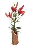 Красные лилии в деревянной вазе изолированной на белизне Стоковое Изображение