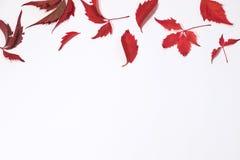 Красные и коричневые осенние листья на белой предпосылке Плоское положение Взгляд сверху Стоковое Фото
