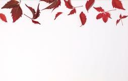 Красные и коричневые осенние листья на белой предпосылке Плоское положение Взгляд сверху Стоковое Изображение