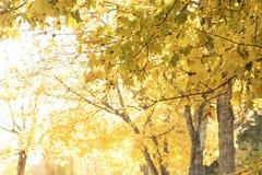 Красные и красочные цвета осени в лесе с дорогой и солнцем Стоковое Изображение RF