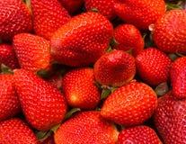 Красные и свежие очень вкусные клубники Стоковая Фотография RF