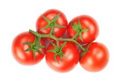 Красные и свежие томаты стоковые фотографии rf