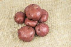 Красные картошки кожи Стоковые Фотографии RF