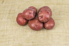 Красные картошки кожи Стоковое Изображение